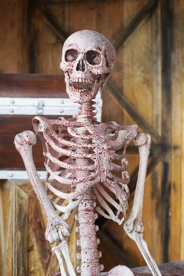 Axiales Skelett und Blut mit dem Lächeln lizenzfreie stockfotos