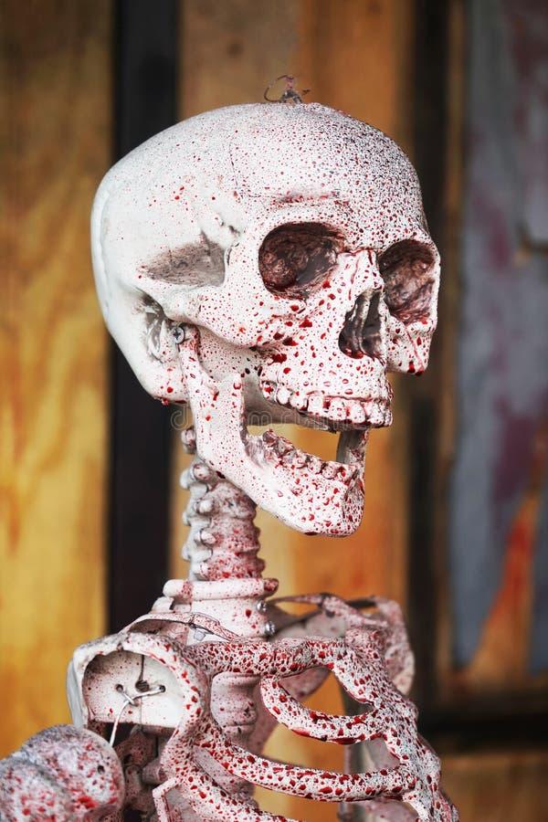 Axiales Skelett und Blut mit dem Lächeln stockbilder