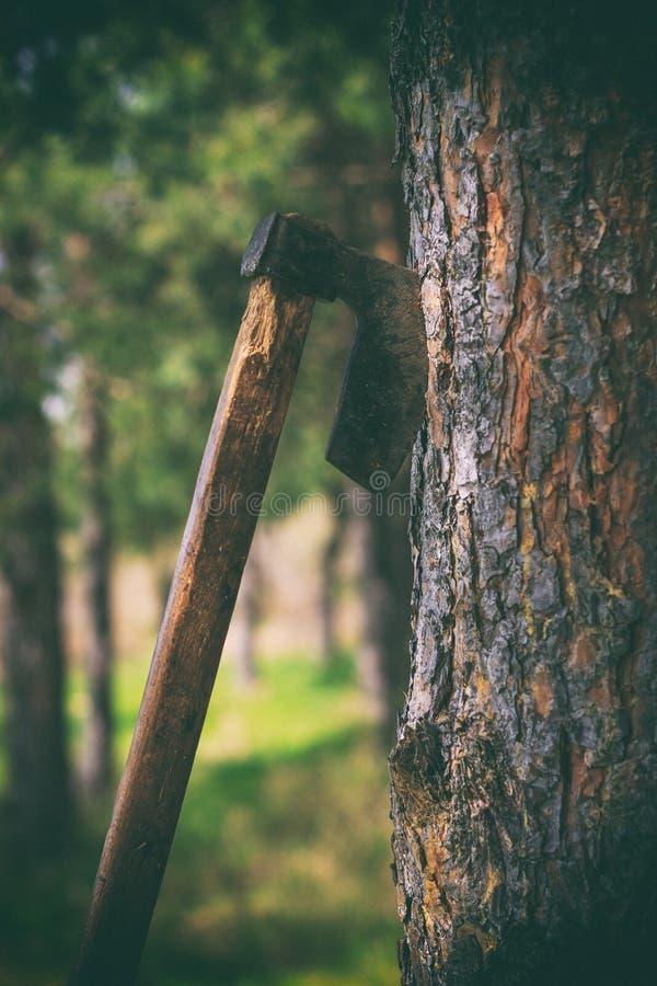 Axt gefahren in Baum stockbild