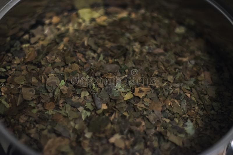 Ayahuasca Guayusa tea leaves from amazon rainforest, preparation brewing in a kettle close-up royalty free stock photo
