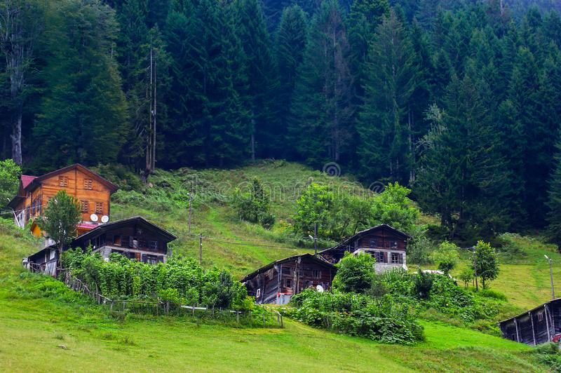 Ayder, Camlihemsin, Rize/ Turkey - August,31,2014. Ayder plateau famous touristic place all over the world, wooden cottage houses front pine trees, popular stock photo