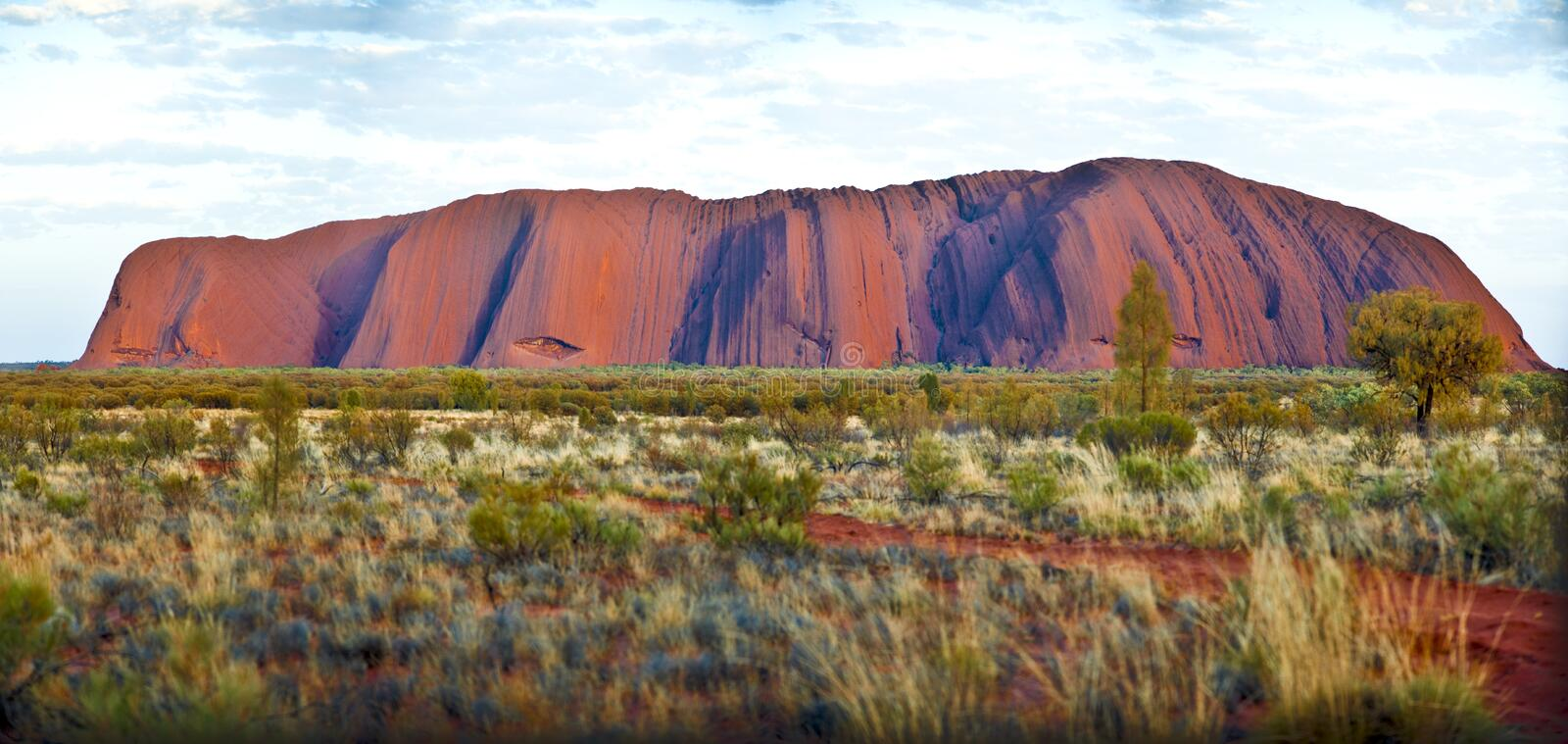 Ayers Rock, Uluru, glowing in evening sun, Outback, Australia. Panorama of Ayers Rock (Uluru), Australia, with shrup in front stock photo
