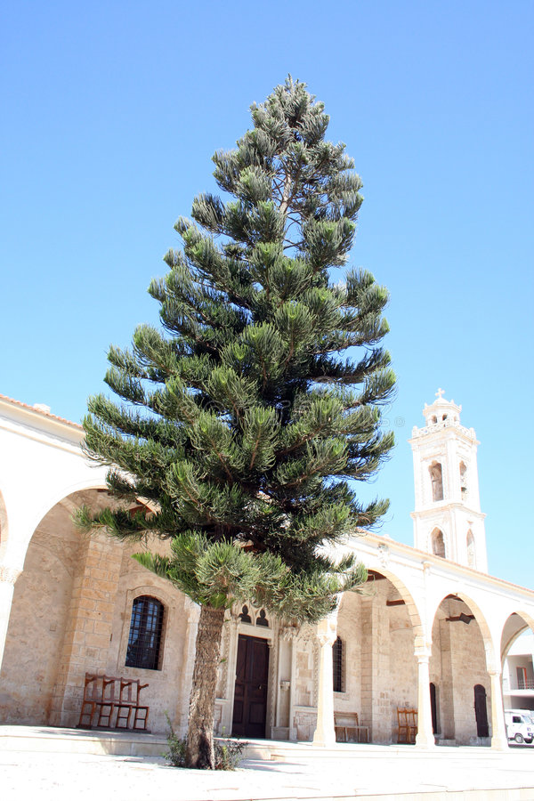 Download Ayia Napa Cyprus stock image. Image of tree, view, city - 3554485