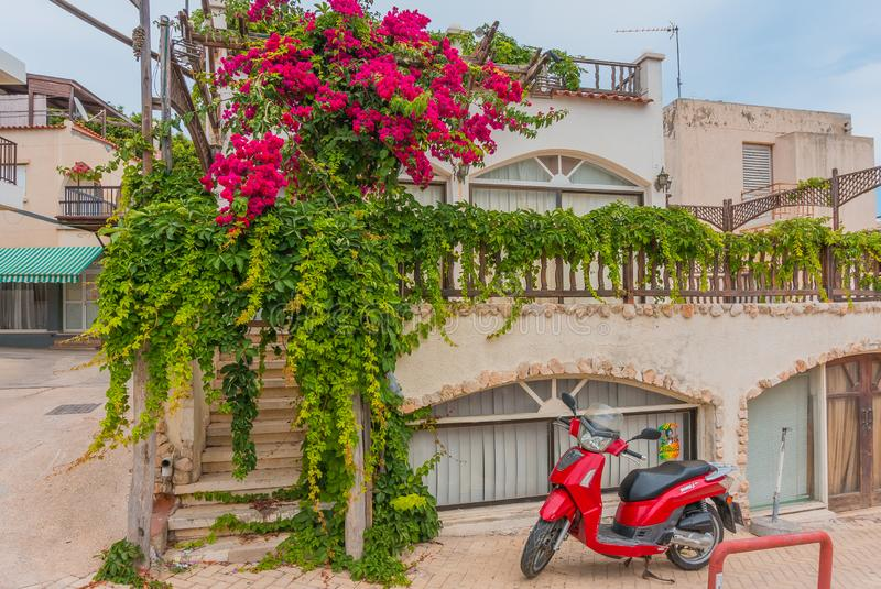 Ayia Napa, Cyprus - 02.02.2018: Colorful scene on the streets of the resort town on a summer day. Magnolia with lush flowers and a royalty free stock photos