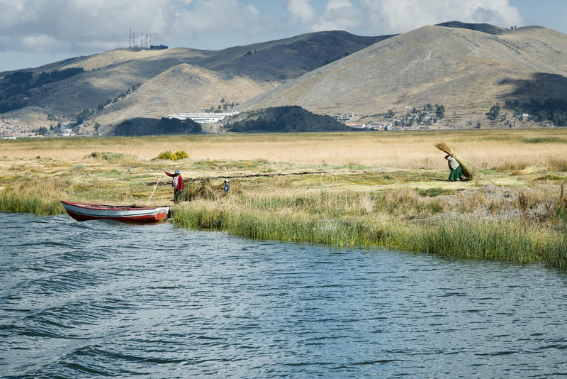 Aymara family collect reed for building Uros floating islands, Titicaca lake stock images