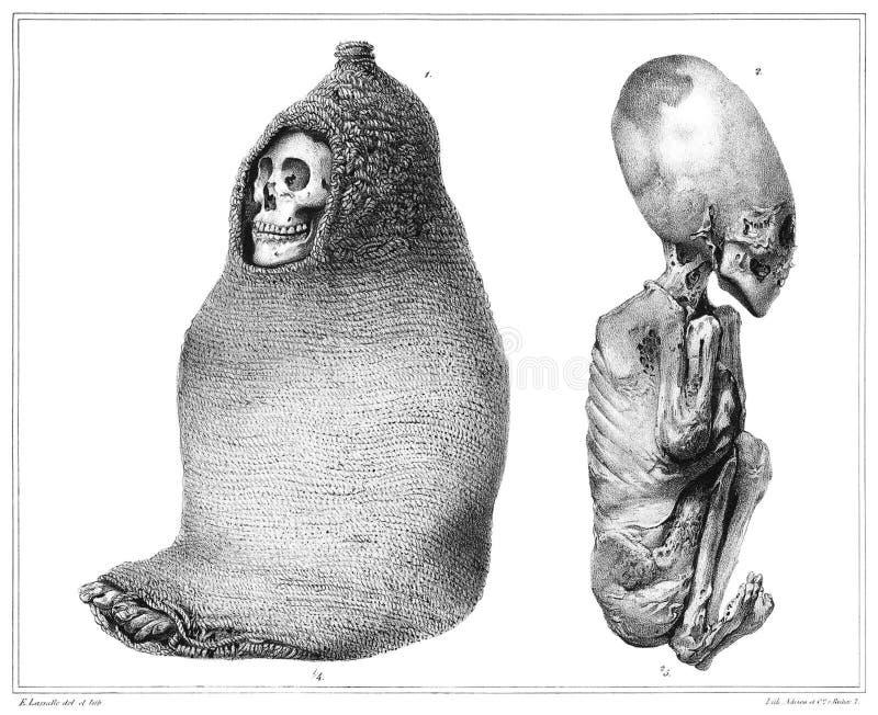 Aymara Mummies royalty free stock photos