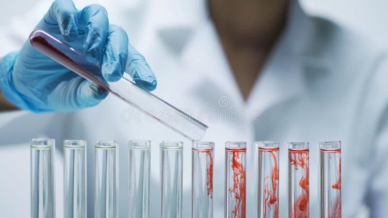 Ayudante de laboratorio que añade el material seco rojo de la prueba en los tubos con agua foto de archivo