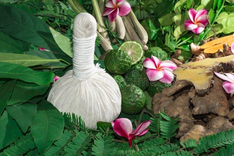 Ayurveda-Kräuter, die Eigenschaften von wild lebenden Tieren heilen stockbild