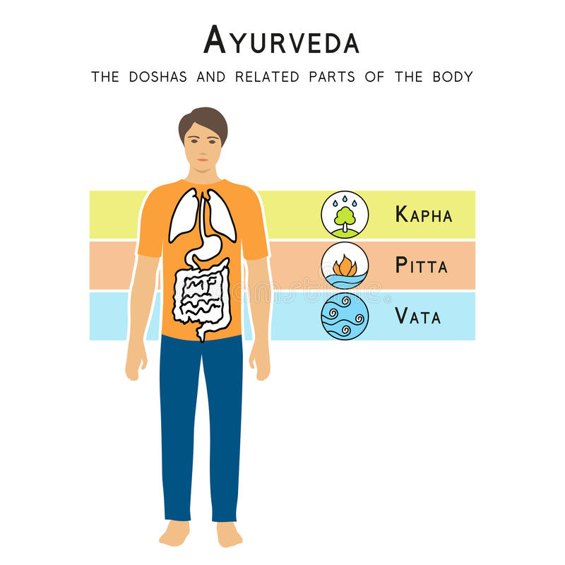 Ayurveda vector illustration. The doshas and related parts of the body. Ayurveda vector illustration. Ayurveda doshas. The doshas and related parts of the body vector illustration