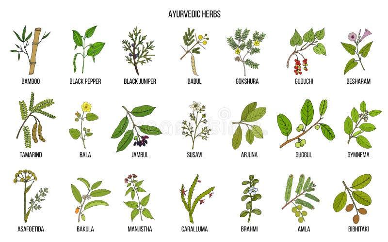 Ayurvedic草本,自然植物的集合 皇族释放例证