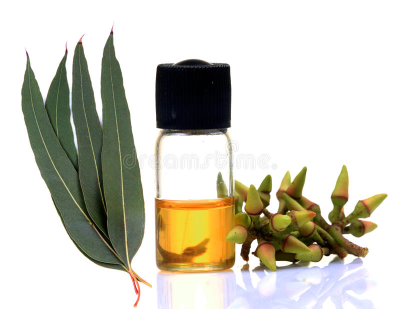 ayurvedic эвкалиптовое маслоо стоковое изображение rf