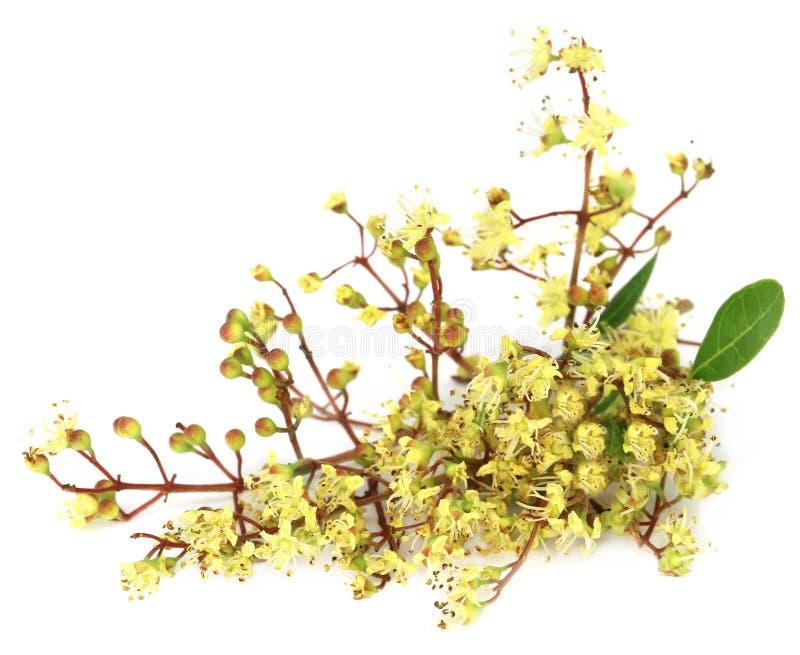 Ayurvedic henna flower. Over white background royalty free stock images