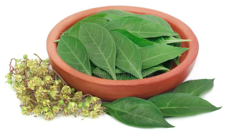 Ayurvedic henna leaves and flower. Over white background stock image