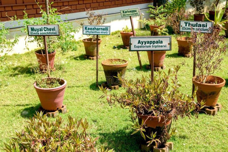 Download Ayurvedic Herb Garden Stock Photo. Image Of India, Ingredient    51343504