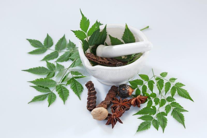 Ayurvedic Herbs with Mortar and Pestle. Indian Ayurvedic Herbs with Mortar and Pestle royalty free stock photos