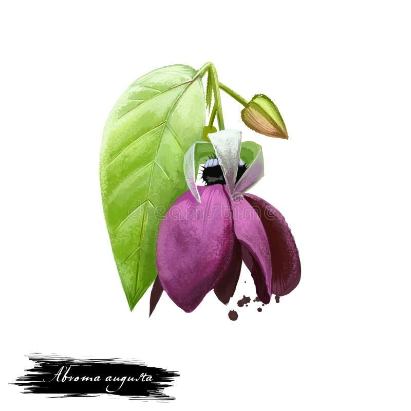 Ayurvedic Kraut Ulatkambal - Abroma Augusta, Blume, Blüte digitale Kunstillustration mit dem Text lokalisiert auf Weiß Gesundes o vektor abbildung
