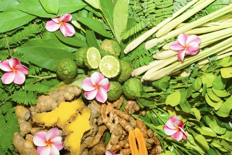 Ayurvedic medicin, indiskt traditionellt växt- arkivbilder