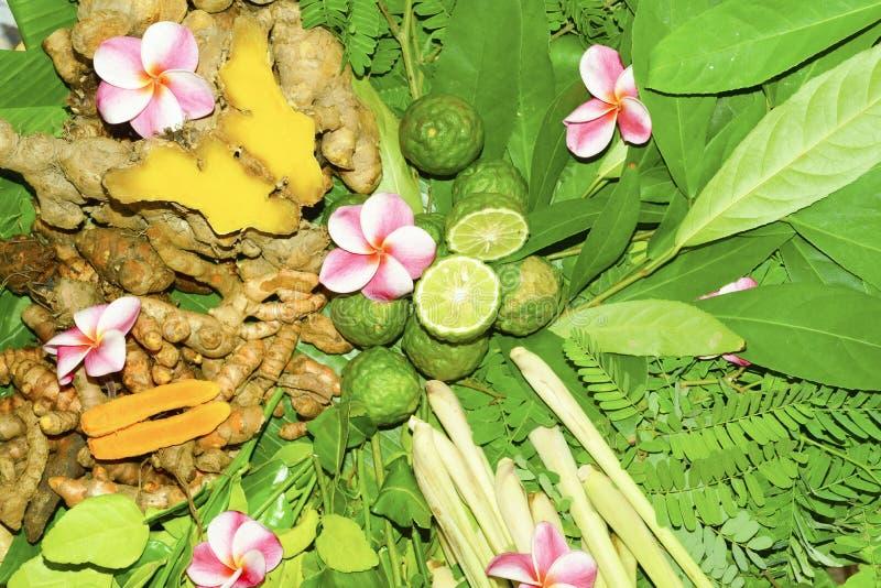 Ayurvedic medicin, indiskt traditionellt växt- royaltyfria foton