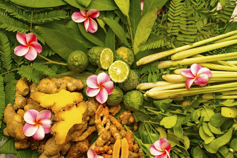 Ayurveda herbs and roots for treatment 2018. Ayurvedic medicine Ayurveda herbs and roots for treatment 2018 royalty free stock photography
