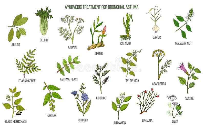 Ayurvedic ziele dla astmy traktowania royalty ilustracja