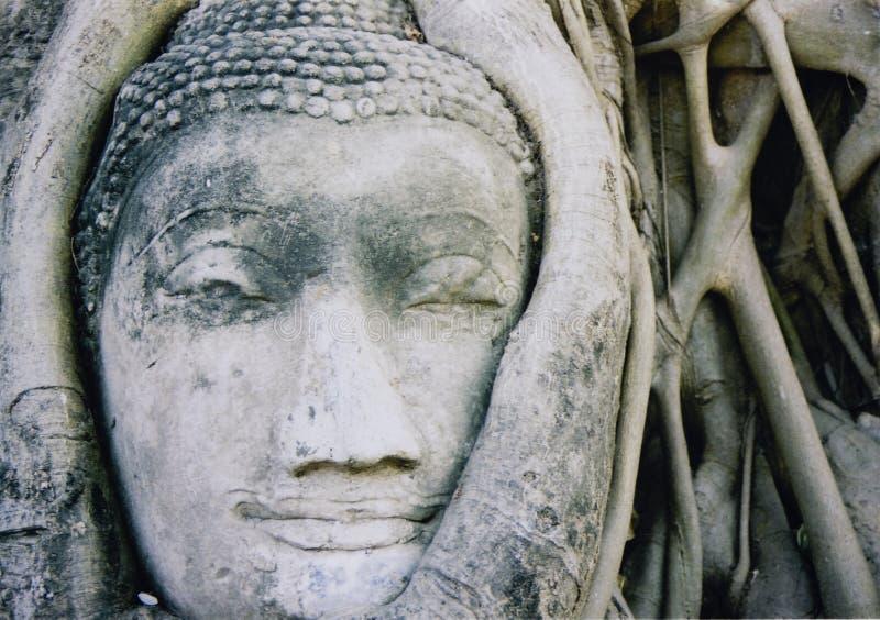 ayuthaya印度榕树buddhas顶头泰国结构树 库存照片