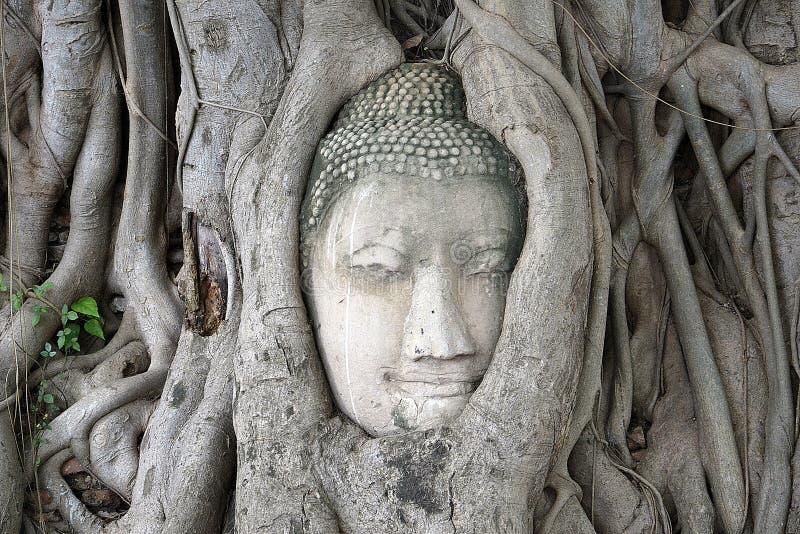 Ayutthaya Buddhahuvud arkivbild