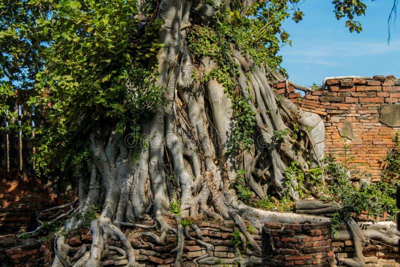 Ayutthaya Dziejowe Parkowe antyczne ruiny wat fotografia royalty free