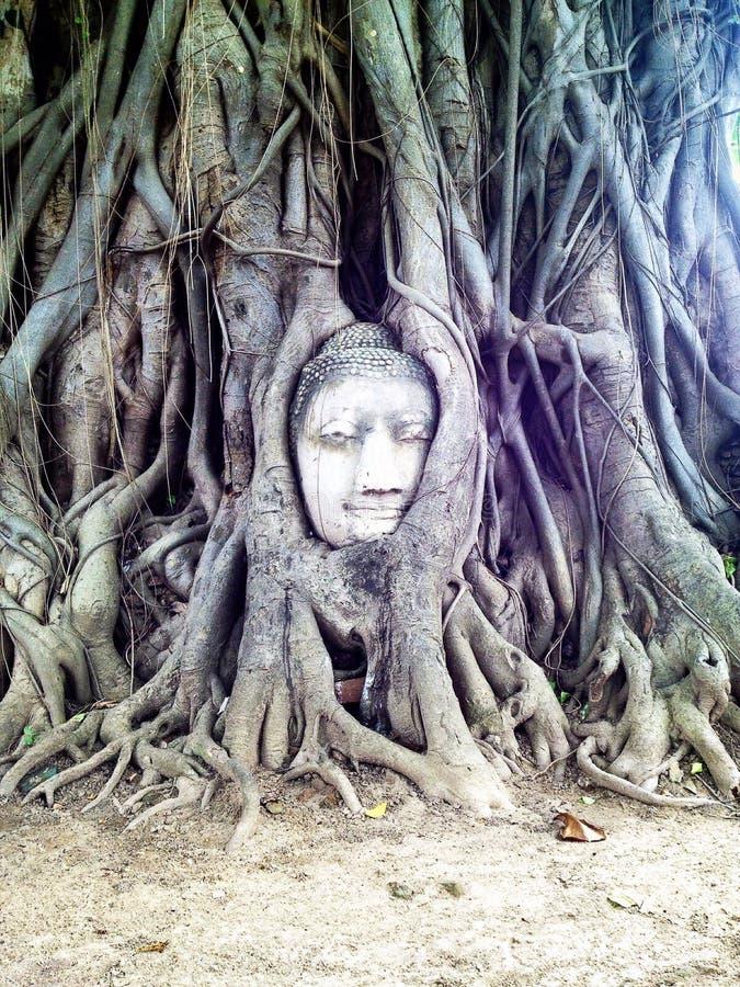 Ayutthaya, o patrimônio mundial imagens de stock