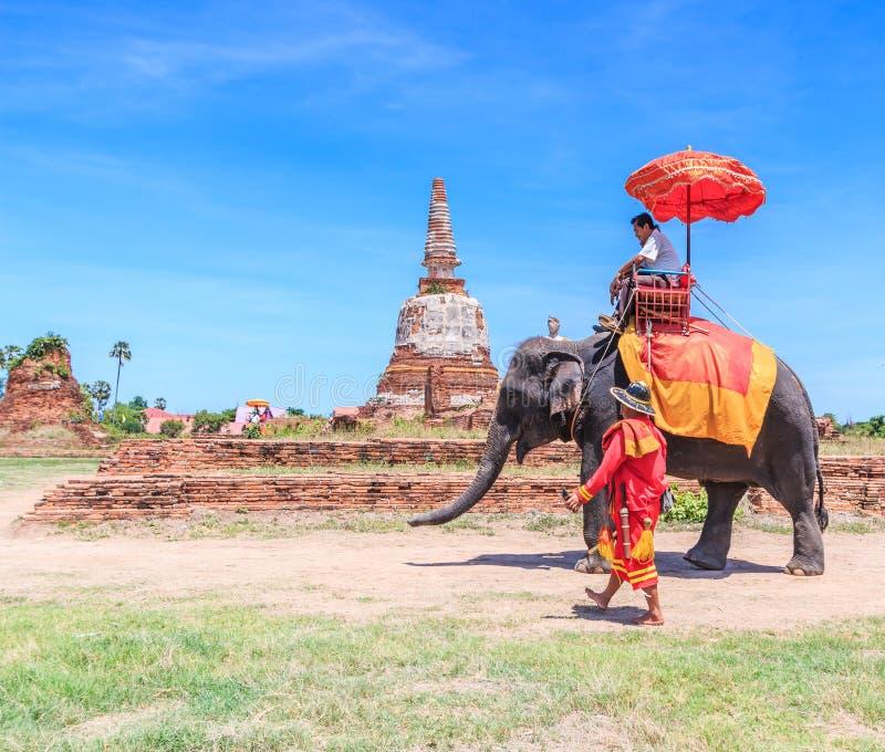 AYUTTHAYA, TAILÂNDIA - 1º DE JUNHO: Turistas em um elefante foto de stock