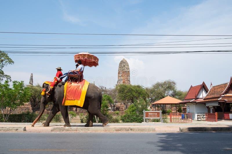 Ayutthaya, Tailândia - 9 de maio de 2015: O elefante toma visitantes visita o templo fotos de stock royalty free