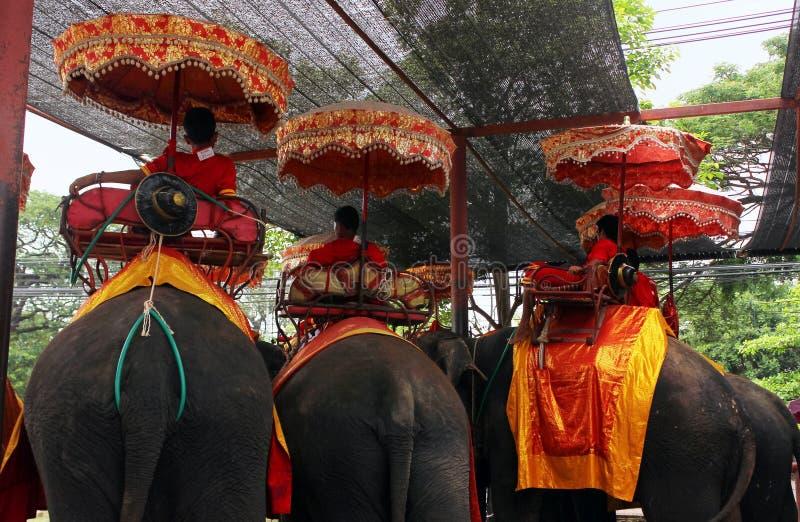 Ayutthaya, Tailandia - 29 de abril de 2014 Grupo de elefantes usados para las visitas tur?sticas fotografía de archivo libre de regalías