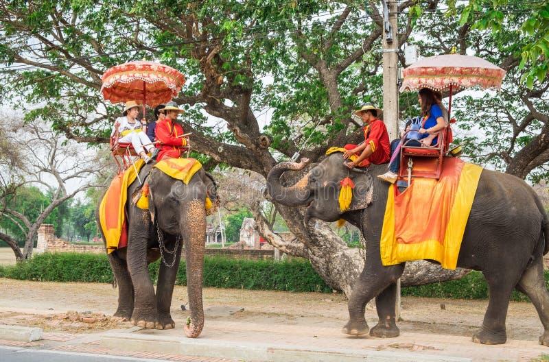 Ayutthaya, Tailandia - 9 de mayo de 2015: Dos elefantes saludan cada uno para hacer que los visitantes extranjeros sienten extrañ imagen de archivo libre de regalías