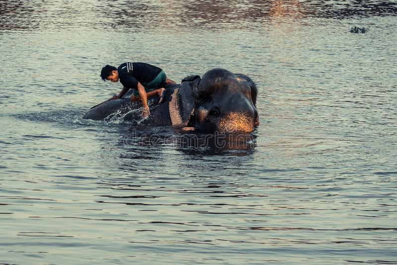 AYUTTHAYA, TAILANDIA - ENERO DE 2019: Instructores que bañan el río del elephantsin en la tarde y que juegan con el lugar ocultad imagenes de archivo