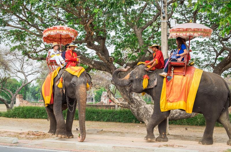 Ayutthaya, Tailandia - 9 maggio 2015: Due elefanti accolgono ciascuno per incitare gli ospiti stranieri a ritenere sconosciuto il immagine stock libera da diritti