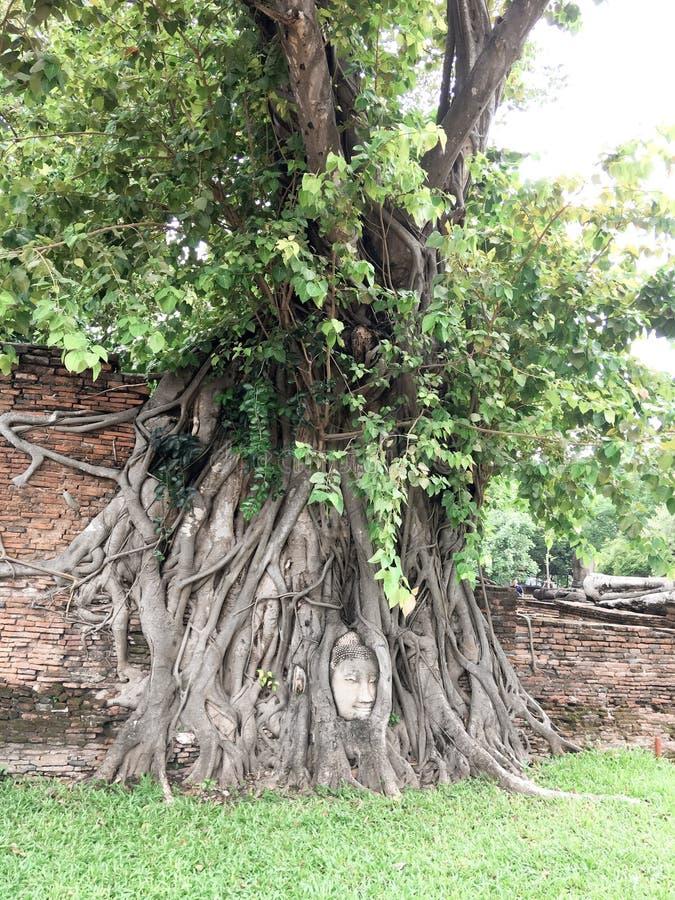 Ayutthaya Thailand - Juni 08 2019: En intressant punkt för turister är huvudet av Buddha royaltyfri foto