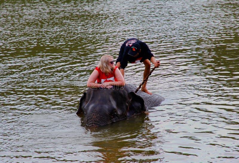 Ayutthaya, Thailand - 14 Nov., 2015: De toerist geniet olifants van opleiding en bad royalty-vrije stock foto's