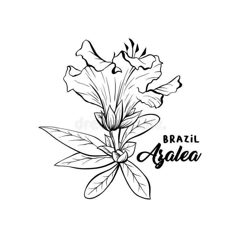 A azálea, flores do ericaceae cobre o esboço da pena ilustração stock