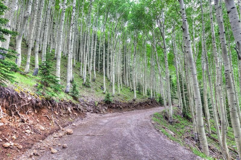 AZ-Coconino National Forest- near Inner Basin Trail. This image was captured on a forest road located at Lockett Meadow Campground, which led up to the Inner royalty free stock photography