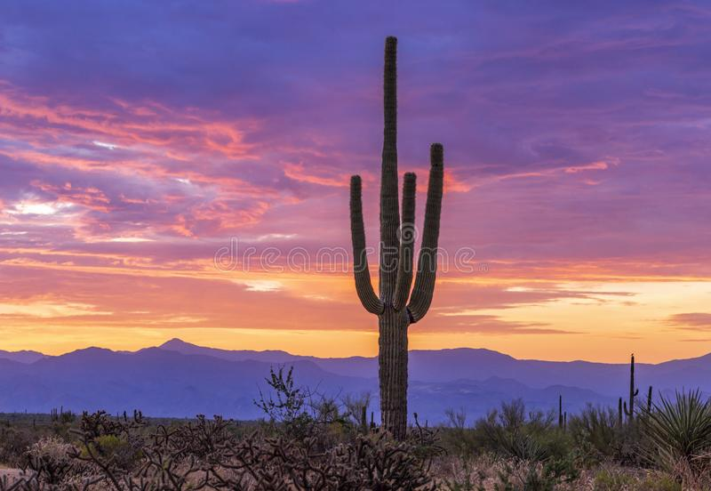 AZ Sunrise In North Scottsdale Desert Preserve with Cactus and mountains. Colorful AZ Sunrise In North Scottsdale Desert Preserve with Cactus in foreground and royalty free stock photos