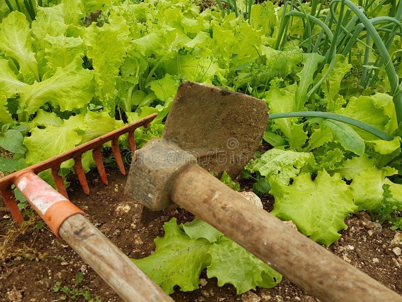 Azada del suelo de la tierra de la comida de las hojas de la agricultura de la lechuga fotografía de archivo