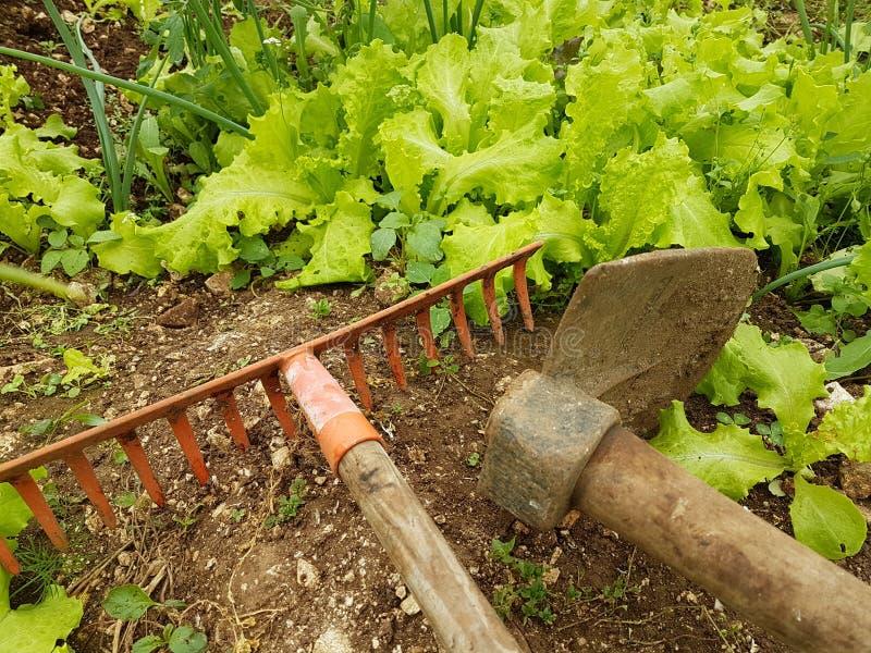 Azada del suelo de la tierra de la comida de las hojas de la agricultura de la lechuga fotos de archivo libres de regalías