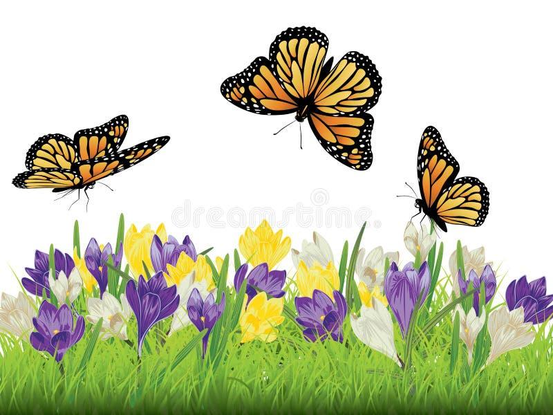 Azafrán en la hierba libre illustration