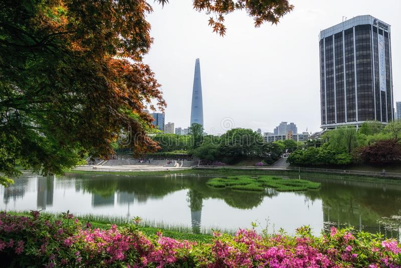 Azalée pourpre et parc olympique de Séoul photographie stock libre de droits