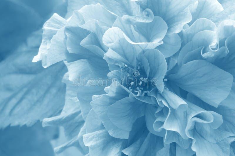 azalea royaltyfri bild