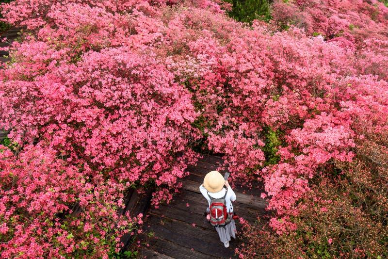 Azalea flowers and girl royalty free stock photography