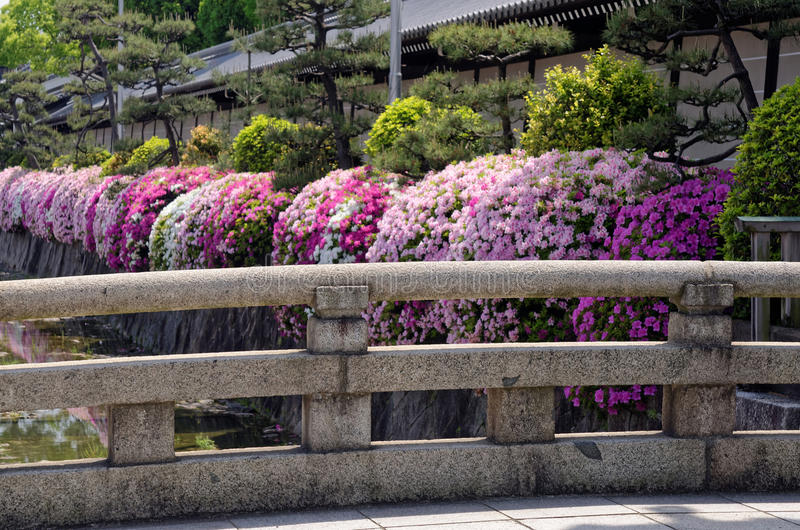 Azalea flowers and old temple, Kyoto Japan royalty free stock image