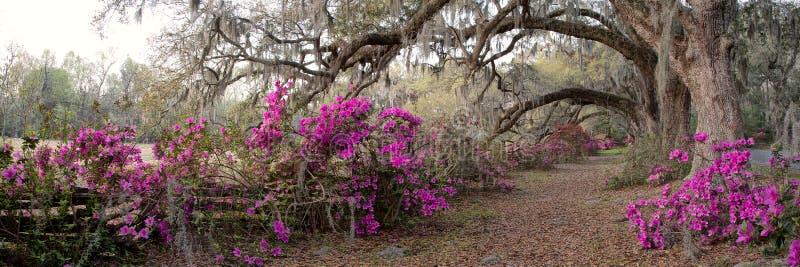 Azalea Garden à Charleston, Sc photos libres de droits