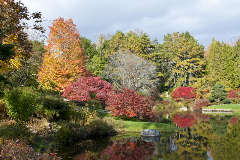 Azalea Garden royalty free stock image