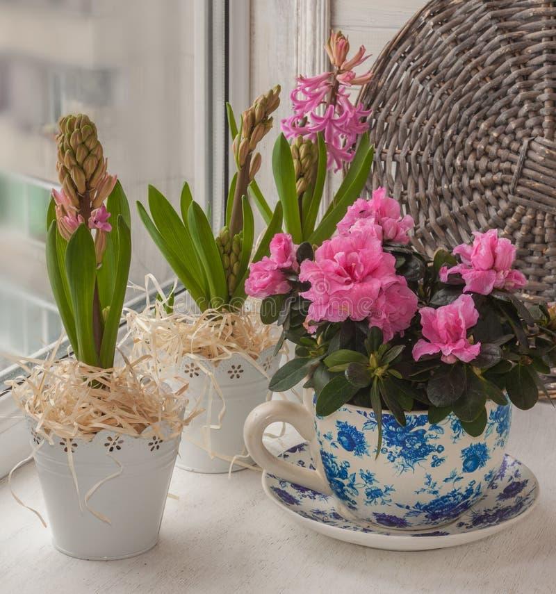 Azalea och hyacinter på fönstret royaltyfri fotografi