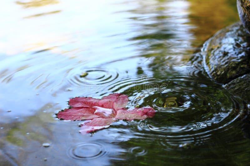 Azalea op de fontein royalty-vrije stock foto's
